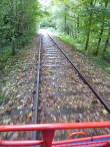 A toute vitesse dans la forêt...!