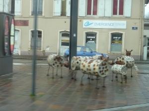 Troupeau de vaches urbaines