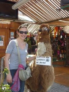 Ce lama a un lumbago... il ne faut donc pas monter dessus!