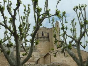 Cathédrale de Cavaillon