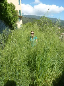 Quand je vous dis que parfois les herbes étaient hautes… je suis debout là !