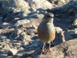 Un adorable petit oiseau qui sautillait près de moi quand je lisais :-)