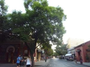 Oui, oui, le grand arbre c'est un mimosa...