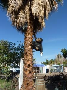 Dans un arbre, un singe