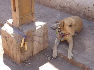 Que peut-on faire avec une corde à sauter et un chien ? La réponse en image… ;-)