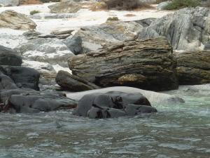 Au milieu des rochers, un éléphant de mer se repose !