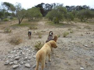 A la découverte des oliviers avec mes trois nouveaux amis