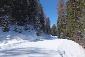 Balade en forêt vers Montalbert