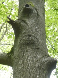 Un arbre qui a des yeux