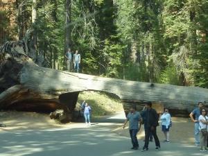 En chemin, un pont original