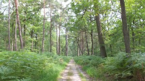 Entrée dans la forêt de Fontainebleau