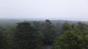 Panorama sur la forêt de Fontainebleau, sous le déluge...