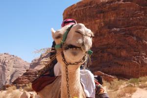Camel face !