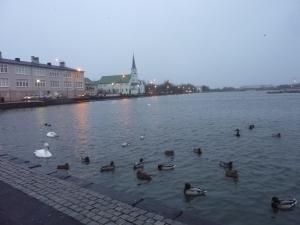 Le lac et ses canards