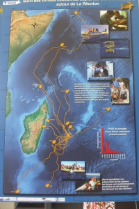 Migration des tortues relâchées par le centre