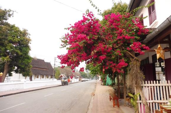 Dans les rues de Luang Prabang
