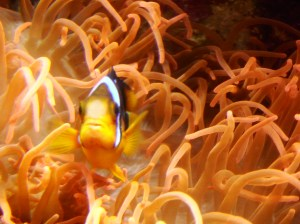 Micro-passage à l'aquarium