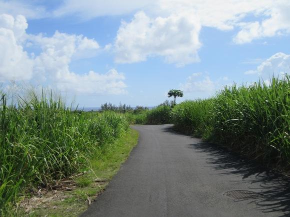 Première partie de la balade sur bitume, entre les champs de canne à sucre