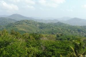 Vue sur l'intérieur verdoyant de l'île depuis Big Bouddha