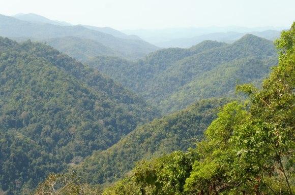 A l'occasion d'une pause, une magnifique vue sur la jungle...