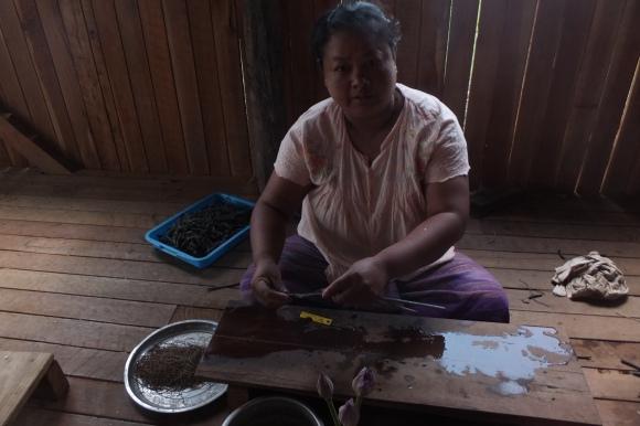 Récupération de la fibre de lotus pour en faire du fil qui sera ensuite tissé