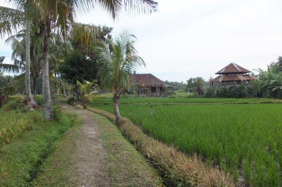 Balade dans les rizières