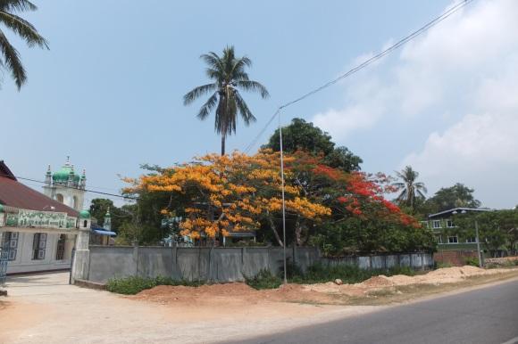 En chemin, des flamboyants rouges ET orange ! Lorsque je retournerai à la Réunion, je pourrai frimer ^^