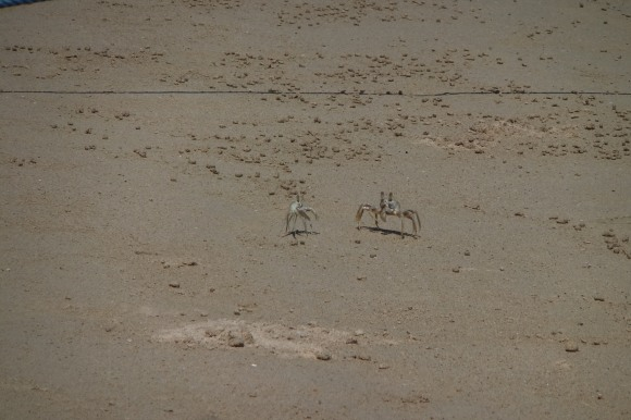 Les habitants de la plage...
