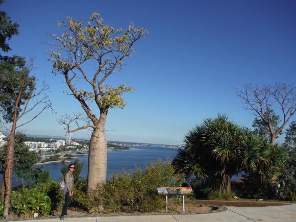 Première rencontre avec un baobab ;-)