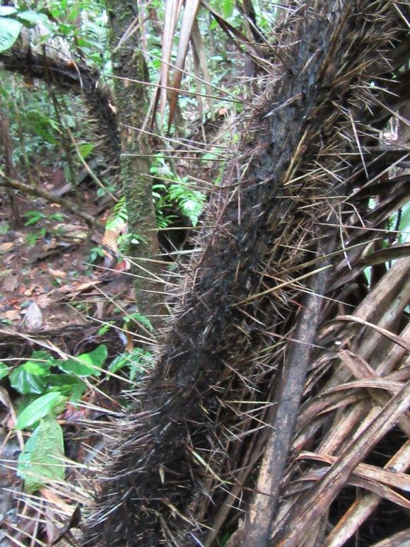Certains arbres ont des troncs peu engageants...