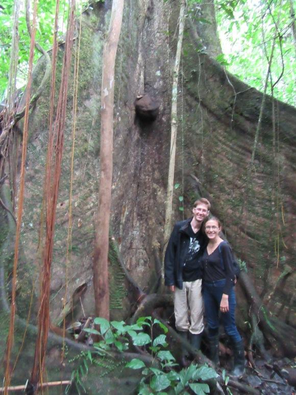 Au pied des arbres géants