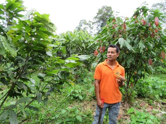 L'un de nos guides dans la plantation de cacao