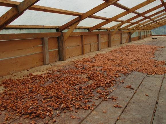 Fermentation du cacao