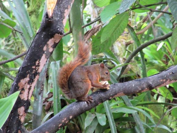 et de temps en temps, un écureuil vient leur piquer de la banane ;-)