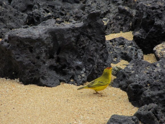et des oiseaux jaunes trop mignons