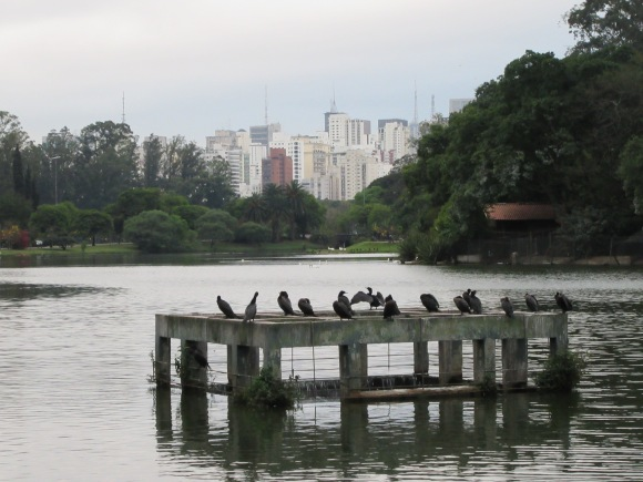 Balade dans le parc Ibirapuera