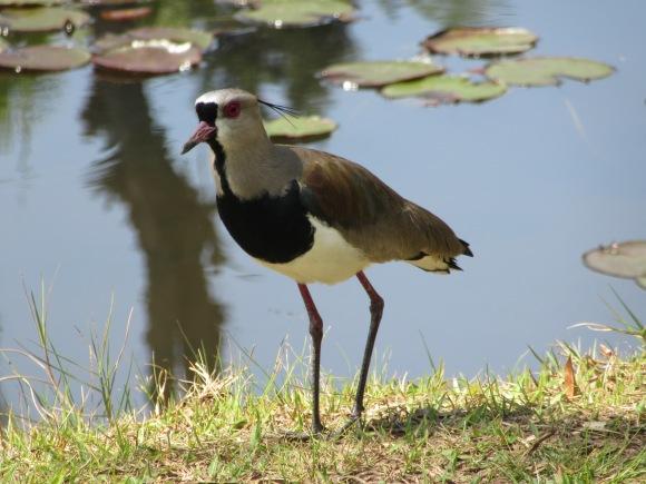 Pour les ornithologues qui nous lisent ;-)