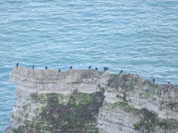 ... repaire pour les cormorans !